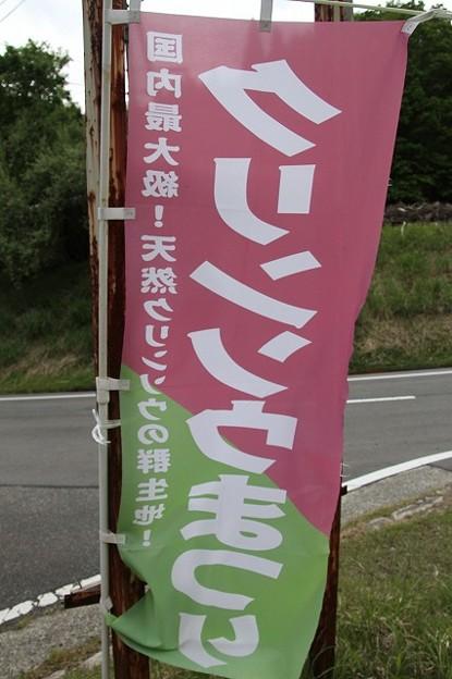 千種高原のクリンソウ(2)