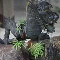 Photos: 「沙羅の寺」應聖寺(3)