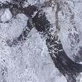 Photos: 着氷の森