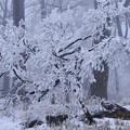 写真: 雪化粧 2