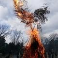 写真: 火の鳥 (どんと焼き)
