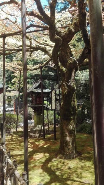 写真: 灯籠とこけ。