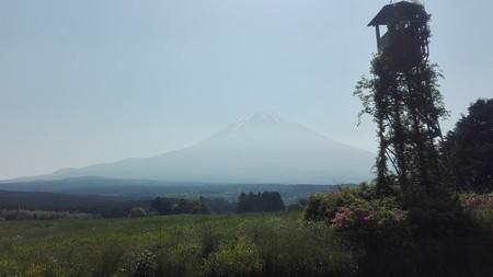 朝霧高原の富士。このバックグランドが好き。