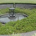 写真: 芝公園の水浴び