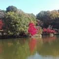 鳥と紅葉@町田薬師池公園