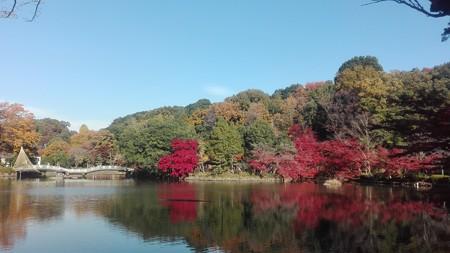 薬師池公園の奥からの眺め