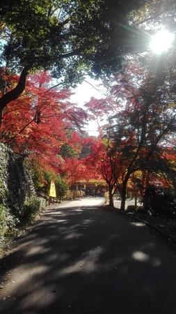 暖かな光@薬師池公園