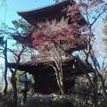 写真: 豪徳寺 三重塔
