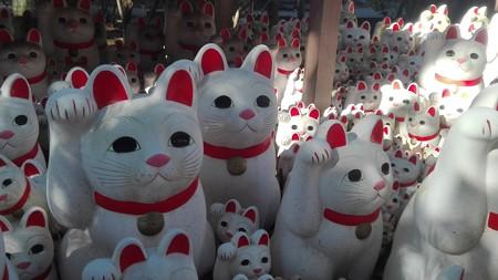 招福猫児5