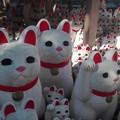写真: 招福猫児5