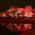 写真: 春の夜道