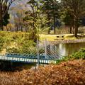 写真: 池に掛かるジオラマ橋※歩けません※
