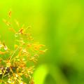 写真: 朝露照らすは実りの種