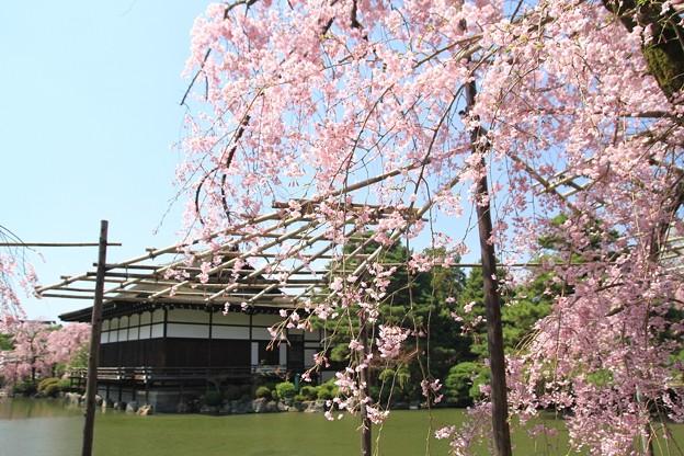 紅枝垂れ桜の神苑