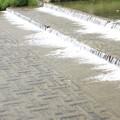 写真: 賀茂の流れ