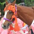 写真: 御馬