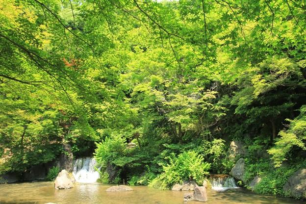 新緑と滝の庭園