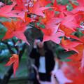 紅葉と写ガール