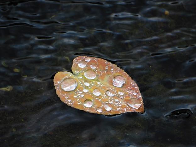 Photos: 雨のプレゼント