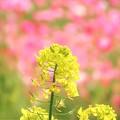 Photos: 輝く花たち 2