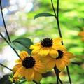 写真: 輝き 黄