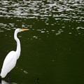 Photos: 先日であった風景 白鷺2