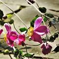 写真: Pink3