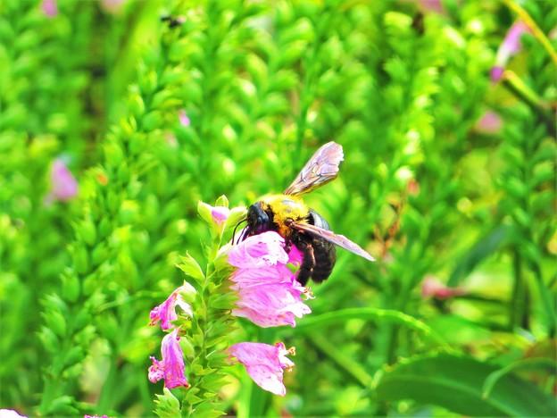 Photos: 花の上の生き物たち蜂