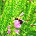 花の上の生き物たち蜂