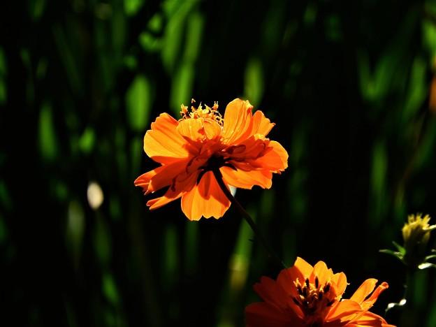 秋に見た輝く色1