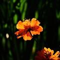 写真: 秋に見た輝く色1