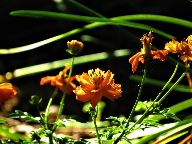 秋に見た輝く色2
