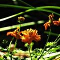 写真: 秋に見た輝く色2