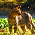 写真: 秋に出会った光景 猫