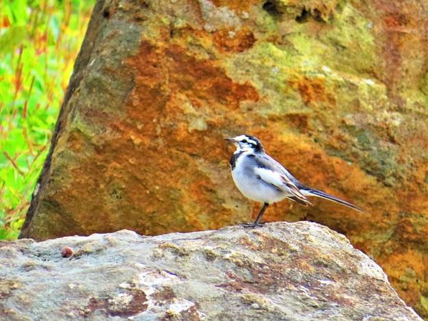 Photos: 秋に出会った光景 小鳥