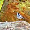 写真: 秋に出会った光景 小鳥