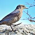 南の島で出会った風景 鳥