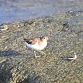 Photos: 南の島で出会った風景 鳥4