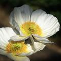 冬に観た花 9