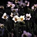 写真: 冬に咲く花