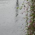 写真: 雨になった