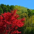 Photos: 色彩の春