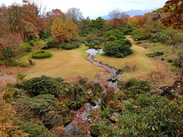 赤城自然園(5)