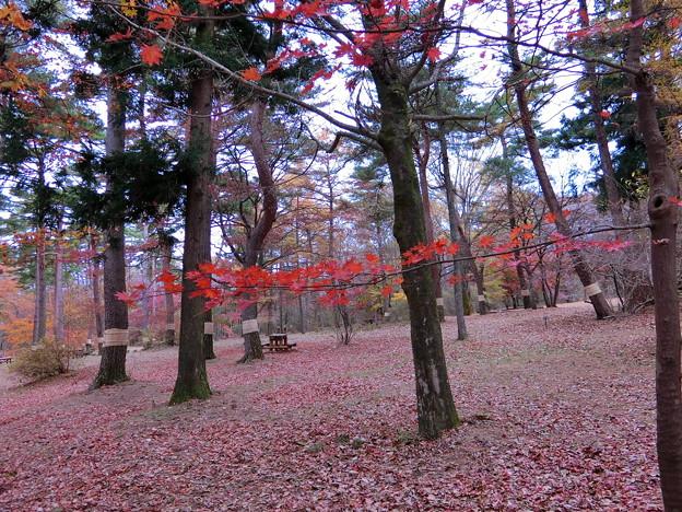赤城自然園(8)