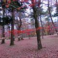 写真: 赤城自然園(8)