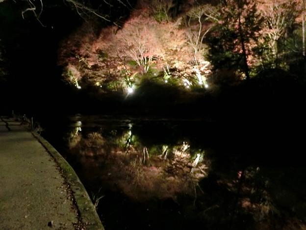 養老温泉ライトアップ(2)