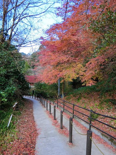 養老渓谷(14) 滝めぐり遊歩道へ