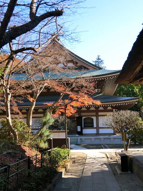 円覚寺境内の紅葉(3)