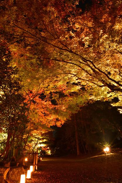 紅葉-玄宮園-1