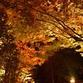 写真: 紅葉-玄宮園-1